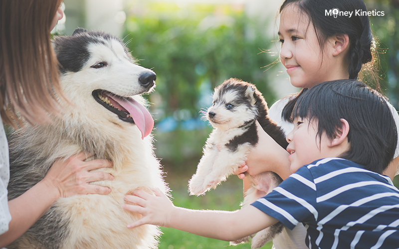 Dog Adoption in Singapore: Costs and Places Near You (2020 Update)