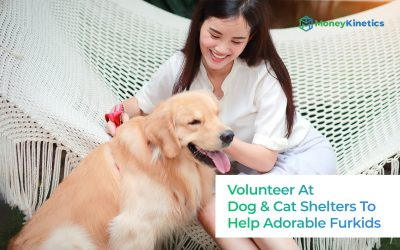 Dog-And-Cat-Shelters-To-Volunteer-At-To-Help-Furkids-In-Singapore